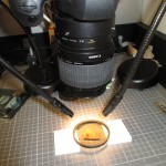 Polarizing filter setup using small pieces of foam to hold filter above specimen.